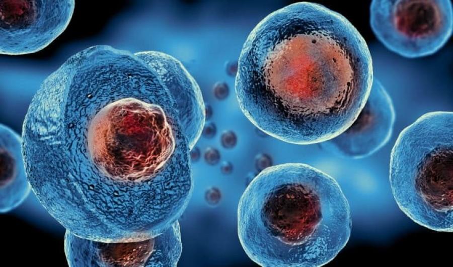 Az őssejtek változatlan népszerűsége