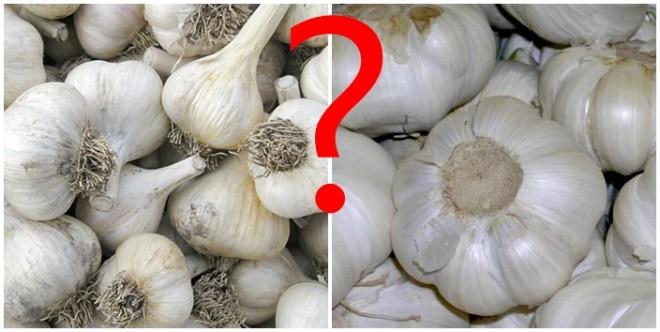 A kínai fokhagyma nem csak az egészségre lehet káros! Inkább válaszd a hazait!