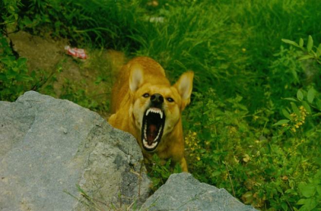 Mit tegyél és mit ne tegyél, ha rád támad egy kutya!