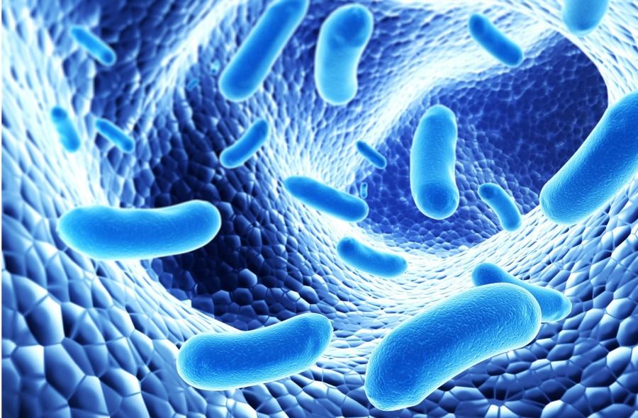 Pro- és prebiotikumokról röviden